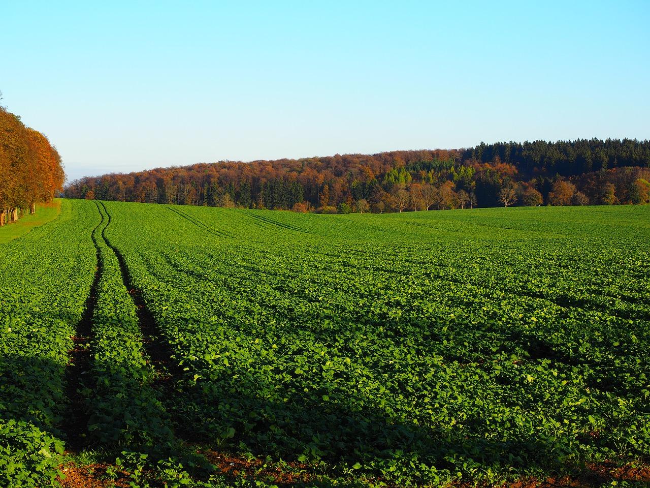 Органические удобрения - виды и способы применения