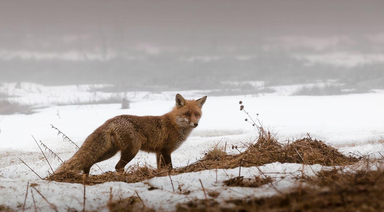 Календарь охотника на декабрь - на кого разрешена охота в декабре
