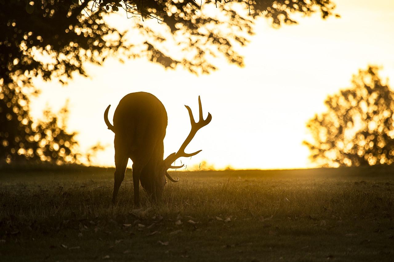 Календарь охотника на сентябрь - на кого разрешена охота в сентябре
