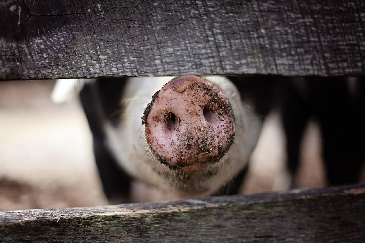 Календарь животновода - ноябрь, сезонные хлопоты