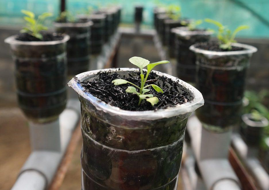 Где купить гидрогель для растений - наш опыт 2021
