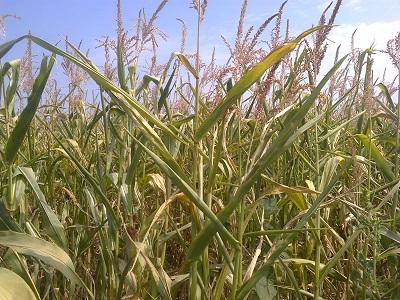 засуха 2012 фото