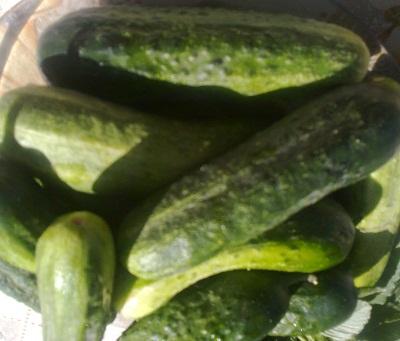 Огурцы ломтиками-салат из огурцов консервированный