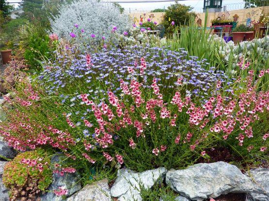 Какие цветы можно посадить осенью