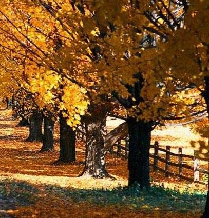 осень сезон
