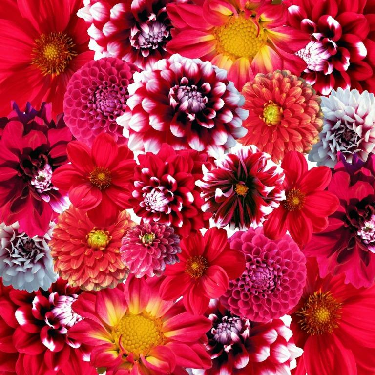 сажаем цветы осенью