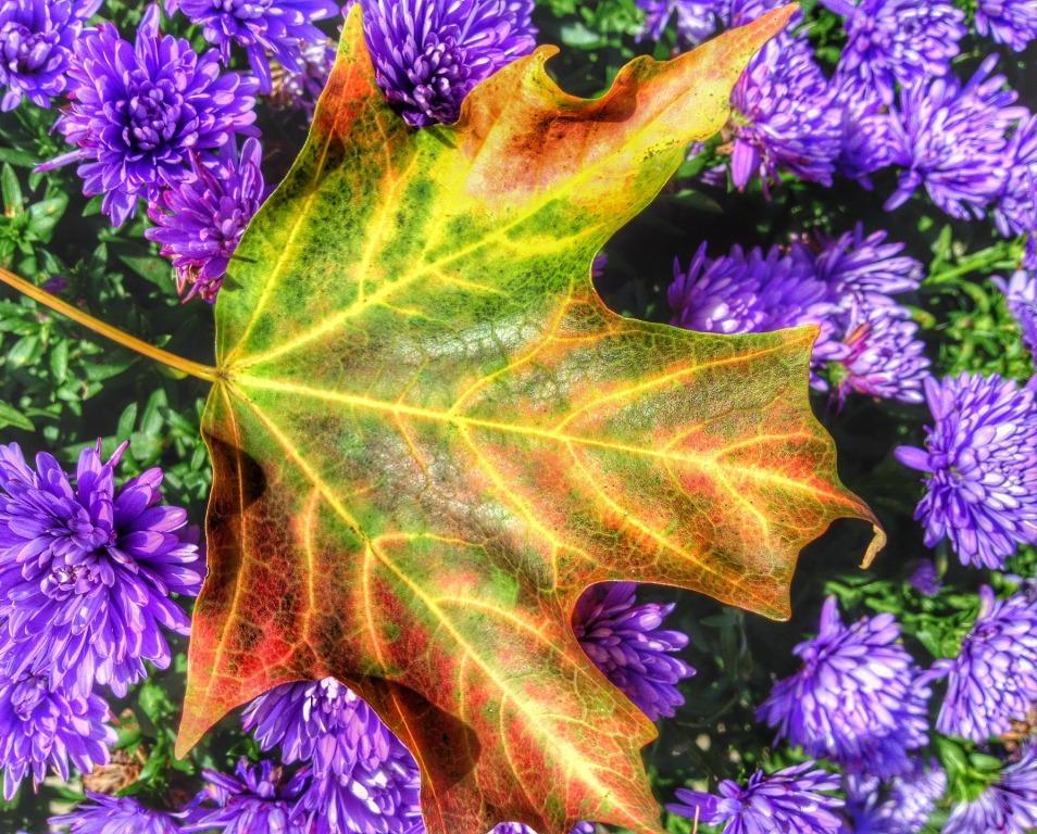 сентябрь в цветнике