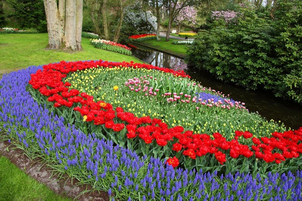 схема посадки луковиц тюльпанов