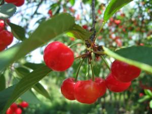 закладка плодового сада