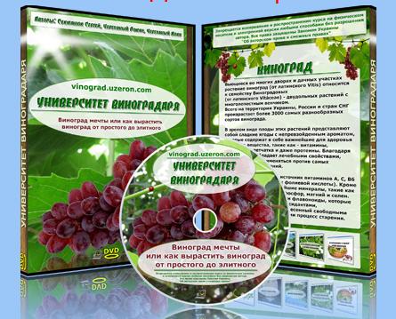 виноград курс