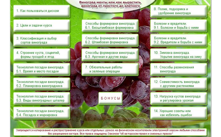 домашний виноград -курс