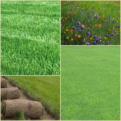обыкновенный (стандартный) газон