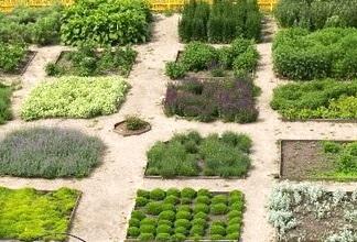 Овощные культуры в совмещенных посадках — Идеальный севооборот