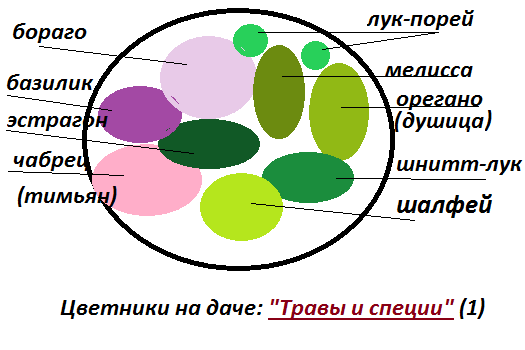 Цветник из пряных трав: схемы