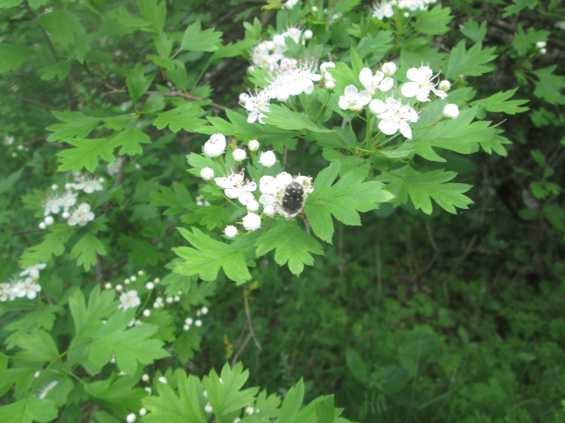 Вредители сада: обработка весной