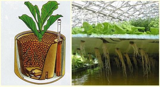 Выращивание без почвы 48
