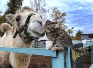 верблюд красивое фото