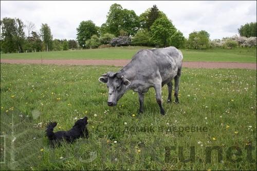 синяя латвийская корова 5