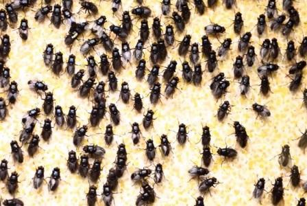 Борьба с мухами — кто побеждает?