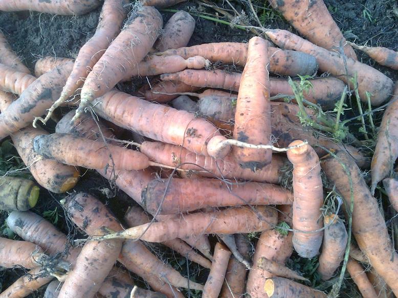 Хранение плодов и овощей — как повысить лежкость?