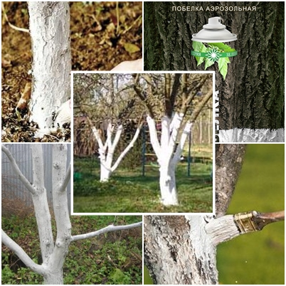 побелка плодовых деревьев осенью