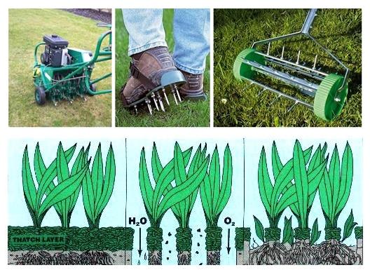 Аэратор для газона: яркая и густая трава без лишних хлопот