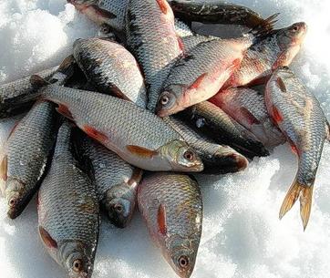 Пресервы с рыбы (плотва)