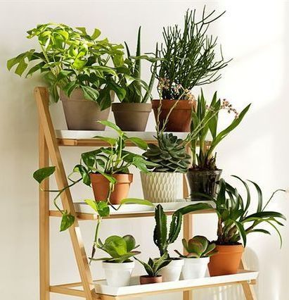 Как спасти растение