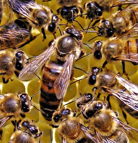 Качественная пчелиная матка — в тепле и добре!