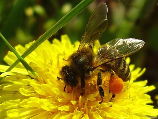 Зимовка пчел: сборка гнезд