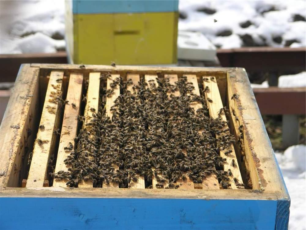 Пчелы в феврале