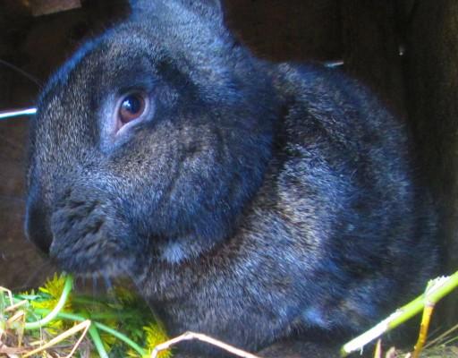 """Кролики - """"Свой домик в деревне"""" читать он-лайн,скачать"""