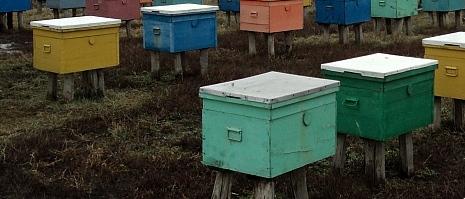 выставка пчел весной