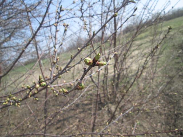 март в саду