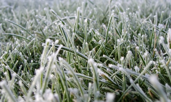 Весенние заморозки, защита от заморозков