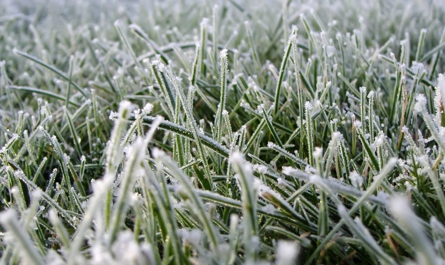Весенние заморозки: когда наступят, защита от заморозков