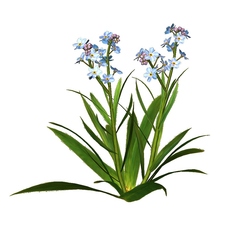 сорняки - виды, фото и названия