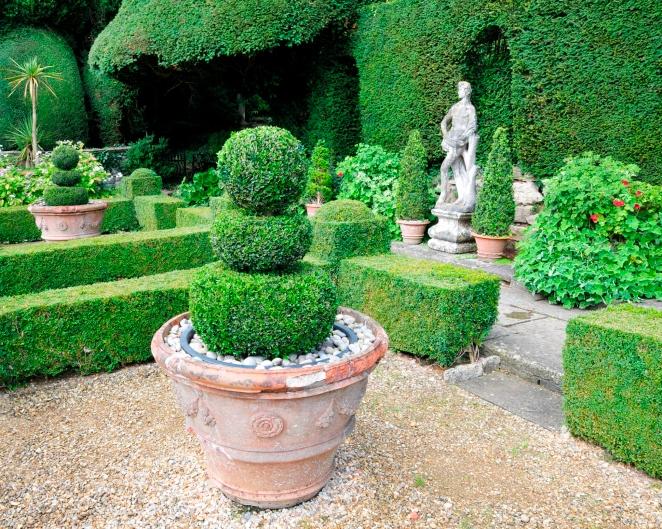Зеленые скульптуры - красивые декоративные кустарники