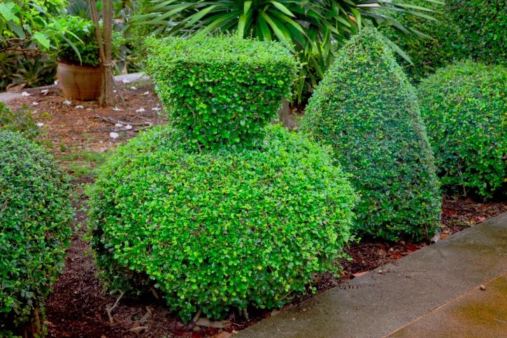 Фото Зеленые скульптуры