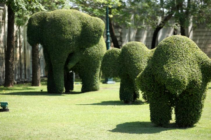 Зеленые скульптуры - декоративные кустарники