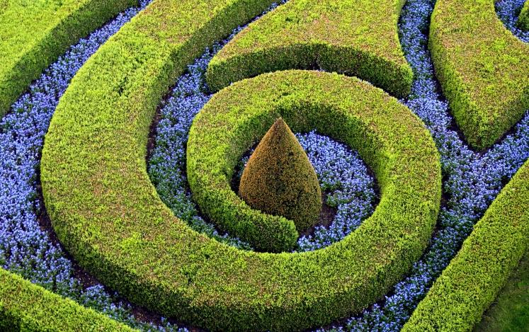 Фото обрезка декоративных кустарников
