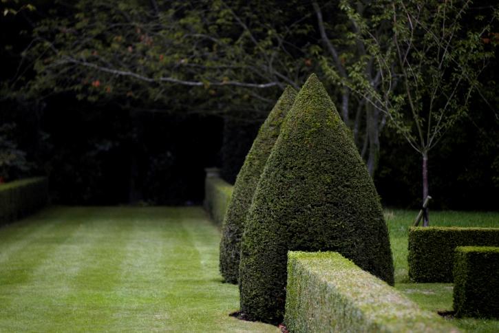 Красивая фигурная обрезка кустарников фото