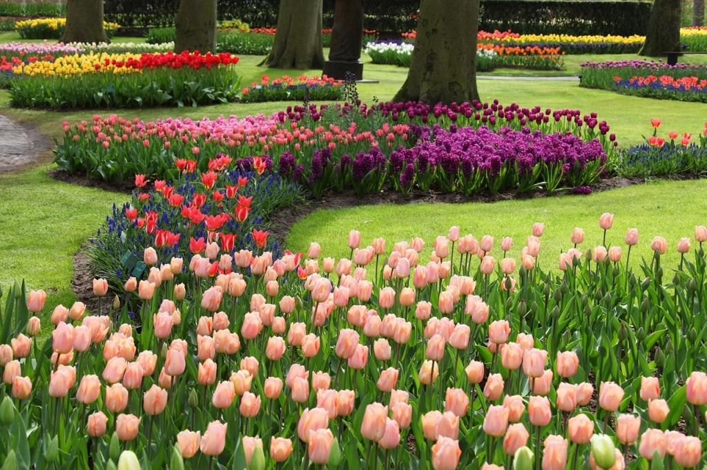Схемы посадки цветника с