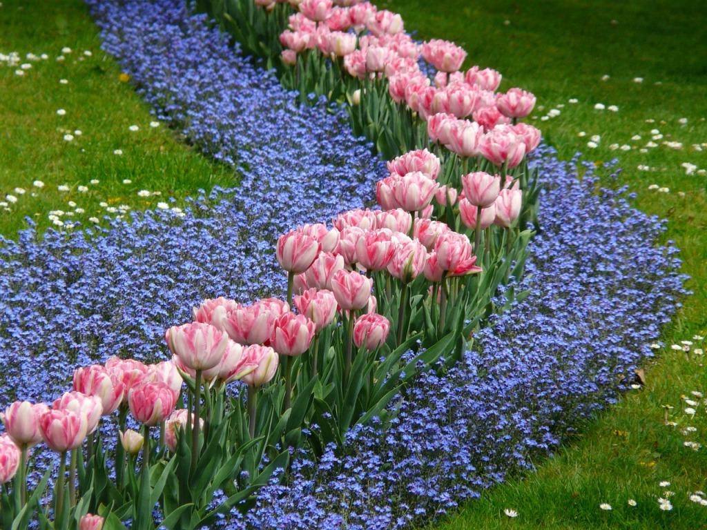 Какие цветы сажать с тюльпанами 34
