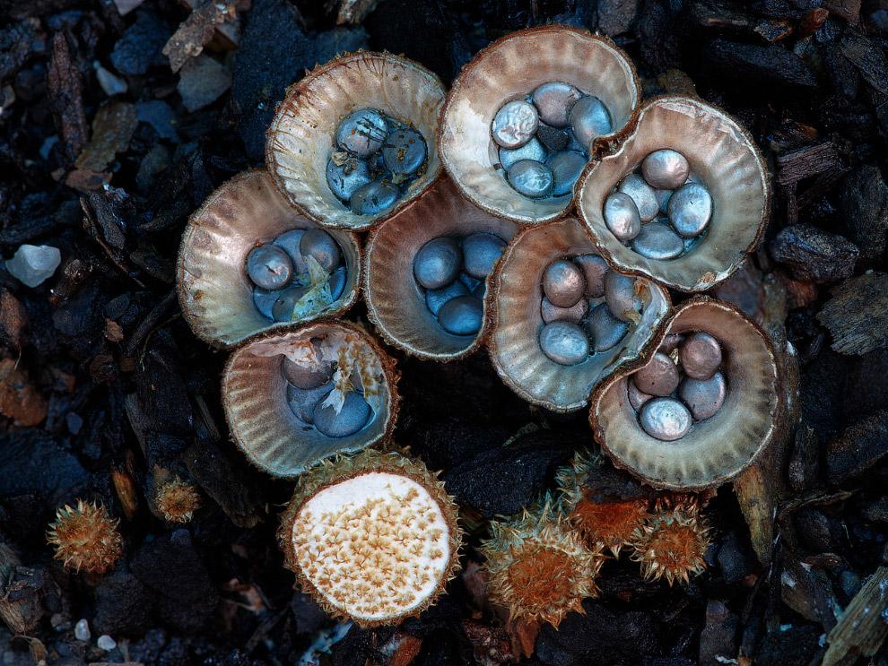Необычные грибы - фото.