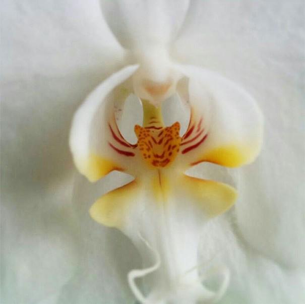 цветы в виде животных 12