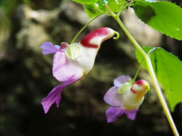цветы в виде животных 17
