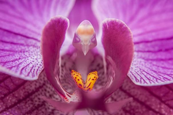 цветы в виде животных 21