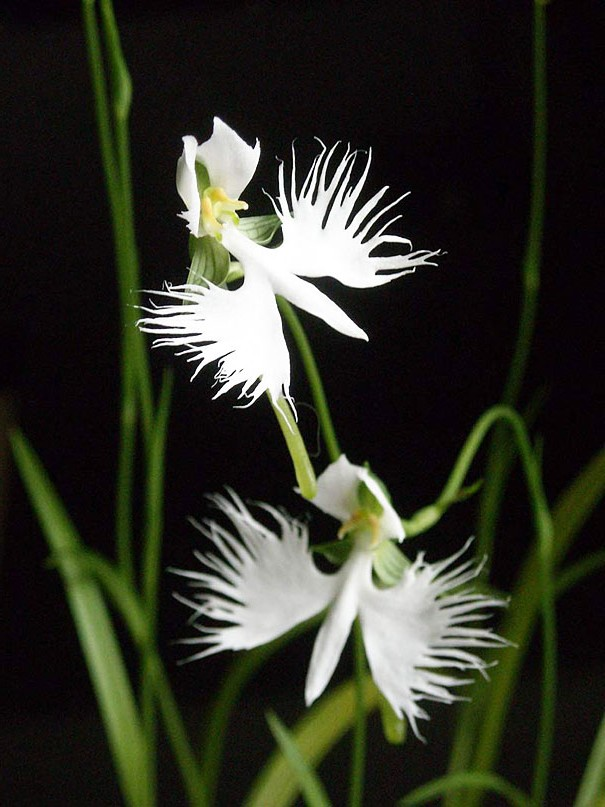 цветы в виде животных 4