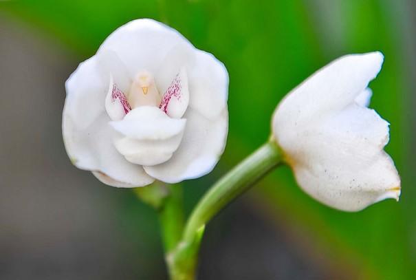 цветы в виде животных 8
